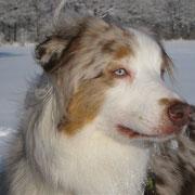 Schnee Januar 2010