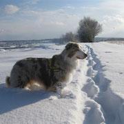 Tiefschnee Januar 2010