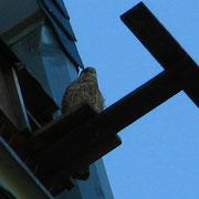 Falkenwohnung