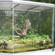 Aquaterrarium für Laubfrösche