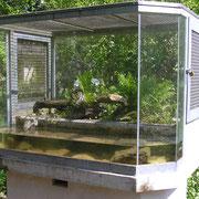 Aquaterrarium für Grasfrosch und Erdkröte