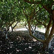 Ein Blick in die Avocado-Plantage der Finca.