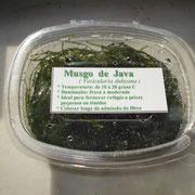 Musgo de Java | Caixa plástico 12x10 cm | Ref. java | € 6,00/un