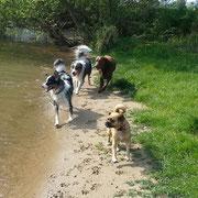 Nanuk, Malu, Lenny und ich! ...oder ich und meine Jungs ;-)