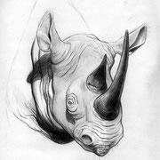 """""""Rhino"""", Bleistift auf Papier, ca. 20 x 30 cm, freie Arbeit"""