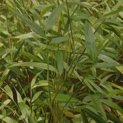 Luz entre las hojas. Óleo sobre madera / Oil on table, 20 x 20 cm, 2005
