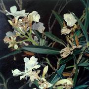 Nerium oleander II, 40x40 cm