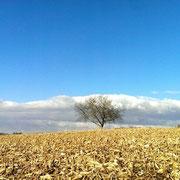 Laufen und Umgebung im Herbst