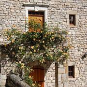 Le rosier devant l'entrée de Lou Clapas