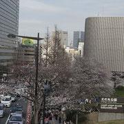 遠くに東京スカイツリーが見える、あそこから歩いて来た。12000歩。