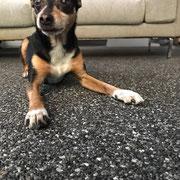 Steinteppich Boden für Hunde