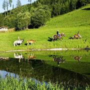 Onze zwemvijver - vakantie op de boerderij in Flachau