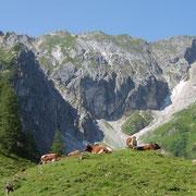 Wandern in Flachau - Urlaub am Bauernhof