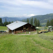 Die Alm vom Steinbachgut in Flachau