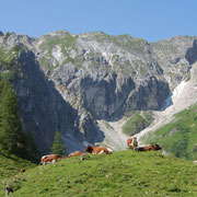 A Summer Holiday in Flachau - Province of Salzburg