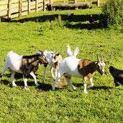 Unser Streichelzoo - Urlaub am Bauernhof Flachau