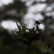 Stéphane Moreau Photographe - Chalonnes sur Loire - Fujifilm - Industar 61