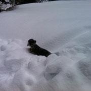 Ich liebe den Schnee...
