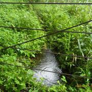 谷戸横断道左岸下流側の流れ