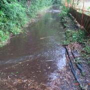 左岸竹林より通路に水が流れ込んでいる