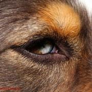 scharfe Augen - ihnen entgeht nichts