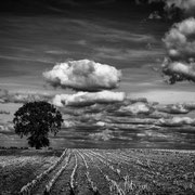 Harvested Area - LFI-Galerie-Landschaften