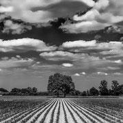 Linien - Leica Master Shot