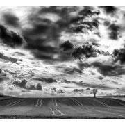 Baum vor dem Horizont - LFI Galerie-Landschaft