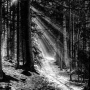 Winterwald - LFI Galerie-Natur