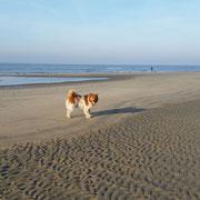 Adibo macht Urlaub am Meer