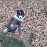 Finja beim Wald erkunden