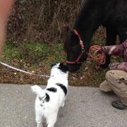 Finalco lernt Pferde kennen