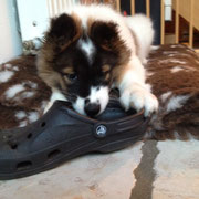 Fari hat Schuh geklaut
