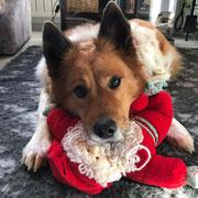 Binka im Weihnachtsmodus