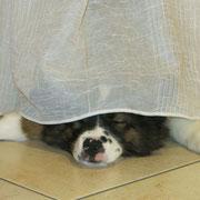 Finja spielt verstecken