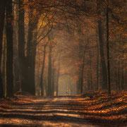 mooi herfst plaatje
