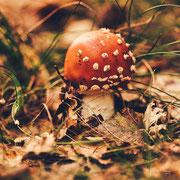 mooie rood met witte paddestoel in het kaapse bos
