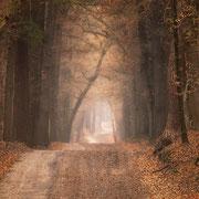 mooi vergezicht in het bos