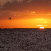 zonsopkomst IJsselmeer met vliegende zwanen