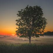 Kalverpolder boom sunrise