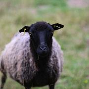 Ich bin nicht das schwarze Schaf
