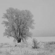 Landschaft aus dem Zug #02
