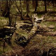 Im Spinnenwald...