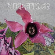 62.bg.-graffiti maybach blume
