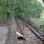 Die Gleise enden im Dschungel          ©Michael Hertel 2019