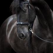 Diese edlen und beliebten Portraits vor schwarzem Hintergrund lassen sich an jedem Reitstall mit natürlichem Licht erstellen!