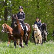 Vor dem Auftritt werden alle Pferde in Ruhe aufgewärmt.