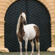 Außergewöhnliche Locations bieten für Pferdefotos eine ganz besondere Atmosphäre! Ich kenne bereits einige tolle Locations und berate hierzu gerne.