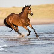 Shootings am Meer? Im Mai 2018 finden wieder Fotoshootings mit Pferden am Strand von Renesse (Zeeland statt)!