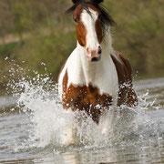 Als er frei durch den See getrabt ist, hat das alleine schon beim Zusehen Spaß gemacht. Geschweige denn, das zu Fotografieren!